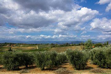 Toscaans landschap van Tess Groote