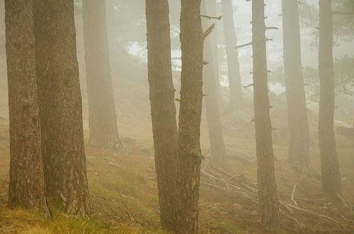 Nebelgeister im korsischen Wald
