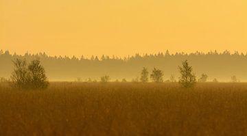 Fochteloërveen landschap in tegenlicht von Remco Van Daalen