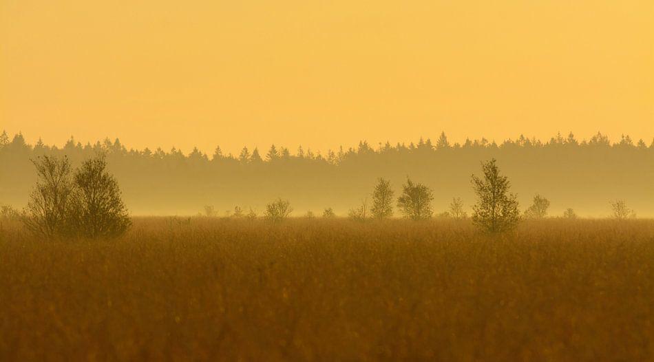 Fochteloërveen landschap in tegenlicht