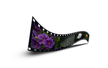 filmstrip van foto-fantasie foto-fantasie
