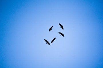 Groepje vogels zweeft in een cirkel hoog in de lucht met blauwe achtergrond. van Twan Bankers
