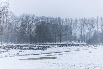 een flat die achter de bomen schuilt van Thomas Winters