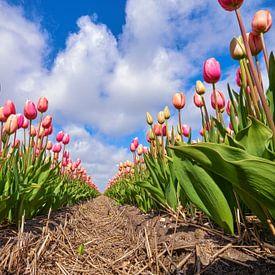 Een lange rij van Hollandse rode tulpen van eric van der eijk