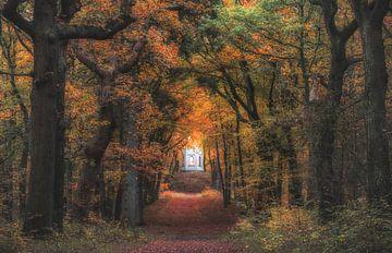 Forest landscape sur