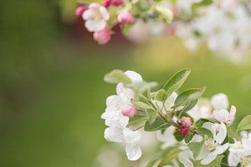 """Bloesem - """"Just a Spring Fling"""" van Carla Boogaard"""