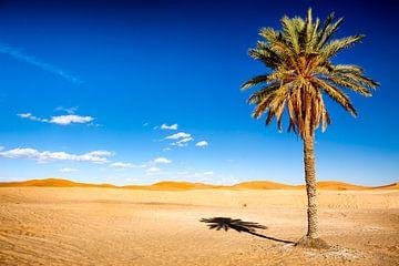 Palmboom in woestijn sur