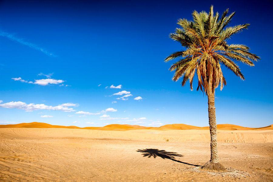 Palmboom in woestijn