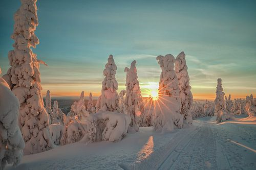 Winter zon van