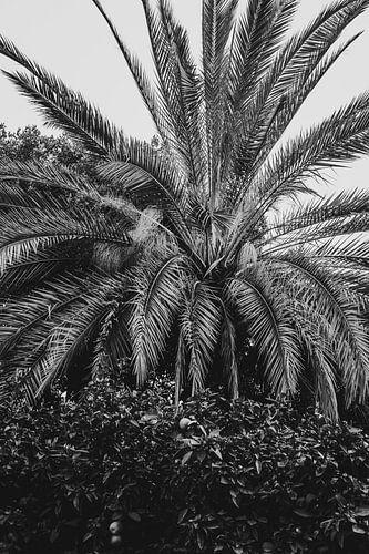 Valencia, spanje palmbomen in het zwart wit