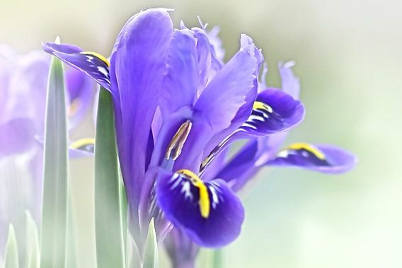 Het is lente van Marlies Prieckaerts
