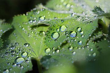 regendruppels op blad van Marieke Funke