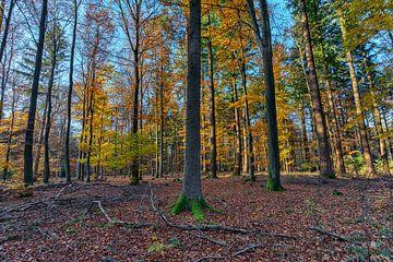 Herbstwald von Uwe Ulrich Grün