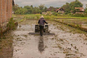 Een Indonesische boer ploegt een rijstveld om na de oogst. van kall3bu