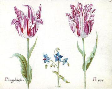 Zwei Tulpen mit unbekannter Blütenpflanze, Jacob Marrel