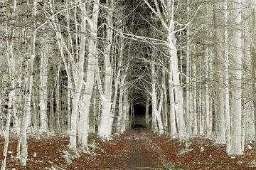 Zilveren bomen van