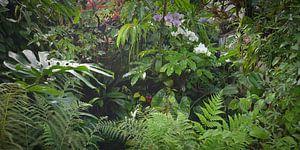 tropisch regenwoud achtergrond