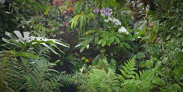 Tropisch regenwoud achtergrond van Egon Zitter