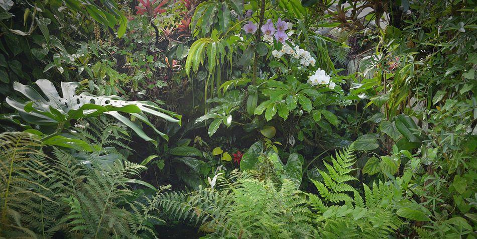 Tropisch Regenwoud Achtergrond Van Egon Zitter Op Canvas Behang En Meer