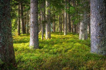 """Waldlandschaft """"Der Frieden des Waldes"""" von Coen Weesjes"""