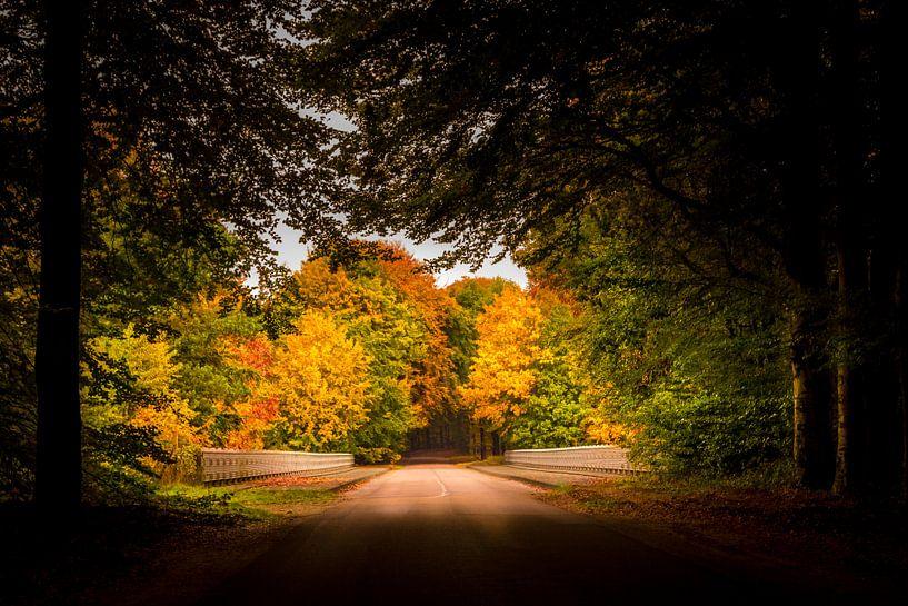 Herfst op de Veluwe van Patrick Rodink