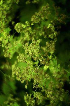 Zomer bloemen in groene tint van Marianna Pobedimova
