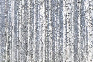 Dood bos | de Brocken | Duitsland van Marianne Twijnstra-Gerrits