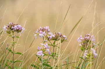 Florale Liebe von Gwen Laremans