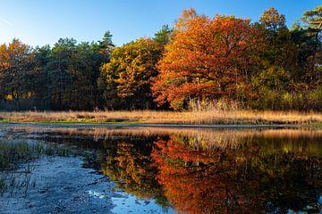 Herfstkleuren in bos van Sjors Gijsbers