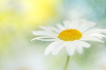 Daisy's heaven von Christl Deckx
