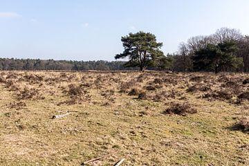 Landschap met boom in Lage Vuursche van Jaap Mulder