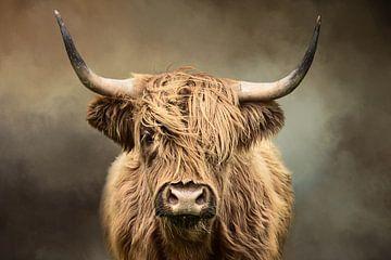 Schottischer Hochlandbewohner von Diana van Tankeren