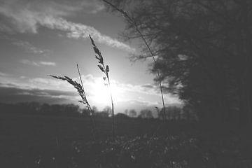 sunlight von Nienke Stegeman