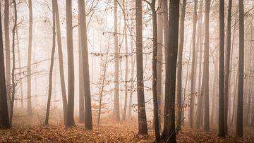 herfst bos  van Tobias Luxberg