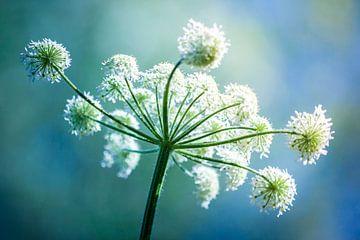 Sommerblume von Simone Karis