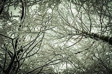 Winterbomen van Johnny Flash