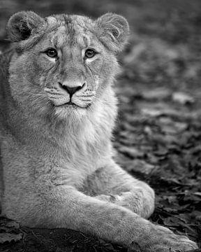Nahaufnahme eines Löwenjungen in Schwarz-Weiß von Patrick van Bakkum