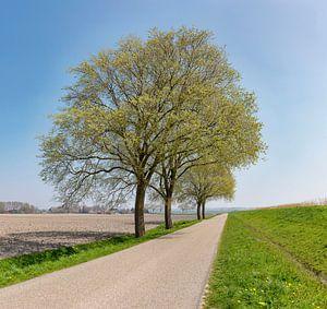 Vrijstaande bomen langs een polderweg achter een dijk, Anna Pauwlona, , Noord-Holland