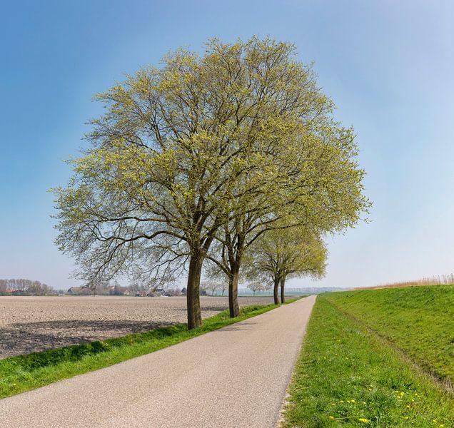 Vrijstaande bomen langs een polderweg achter een dijk, Anna Pauwlona, , Noord-Holland van Rene van der Meer