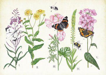 Pflanzen und ihre Insekten von Jasper de Ruiter