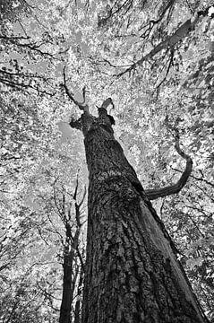 Baum von Erik Reijnders