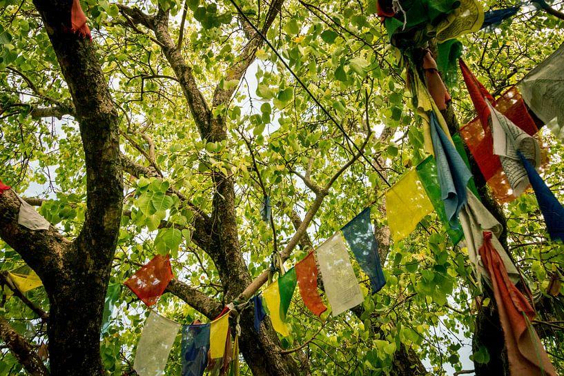 Tibetische Gebetsfahnen von Maarten Borsje