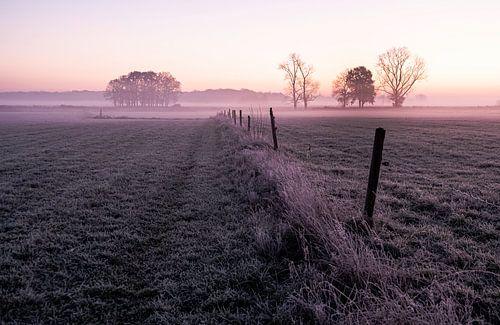 Nederlands landschap in ochtendnevel