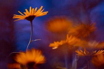 Flower Power van Hiske Boon