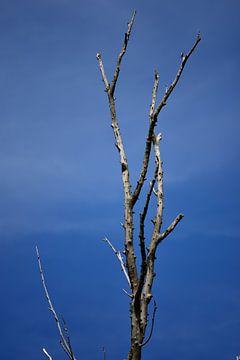 Toter Baum von Gerard de Zwaan