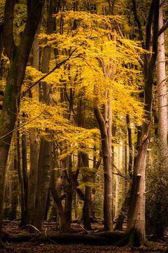 Magischer Herbstwald von Jamesrl Photography