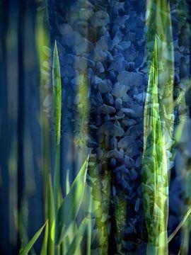 Blauer Regen von Anita Snik-Broeken