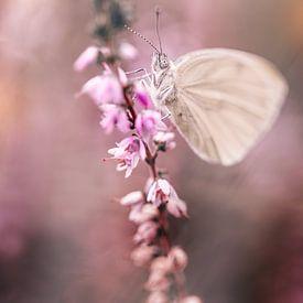 Verträumtes Weiß (Schmetterling) auf dem blühenden rosa Heidekraut von KB Design & Photography (Karen Brouwer)