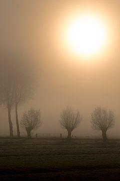 Kopfweiden im Nebel von Moetwil en van Dijk - Fotografie