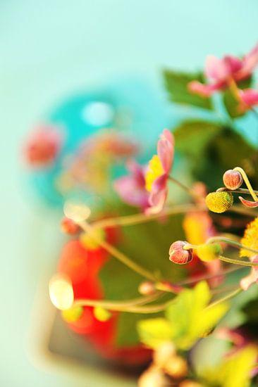 Japanse Anemoon, knopen en bloem van Mariska van Vondelen